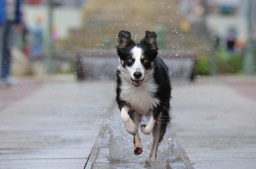 Podometro para perros Fujitsu