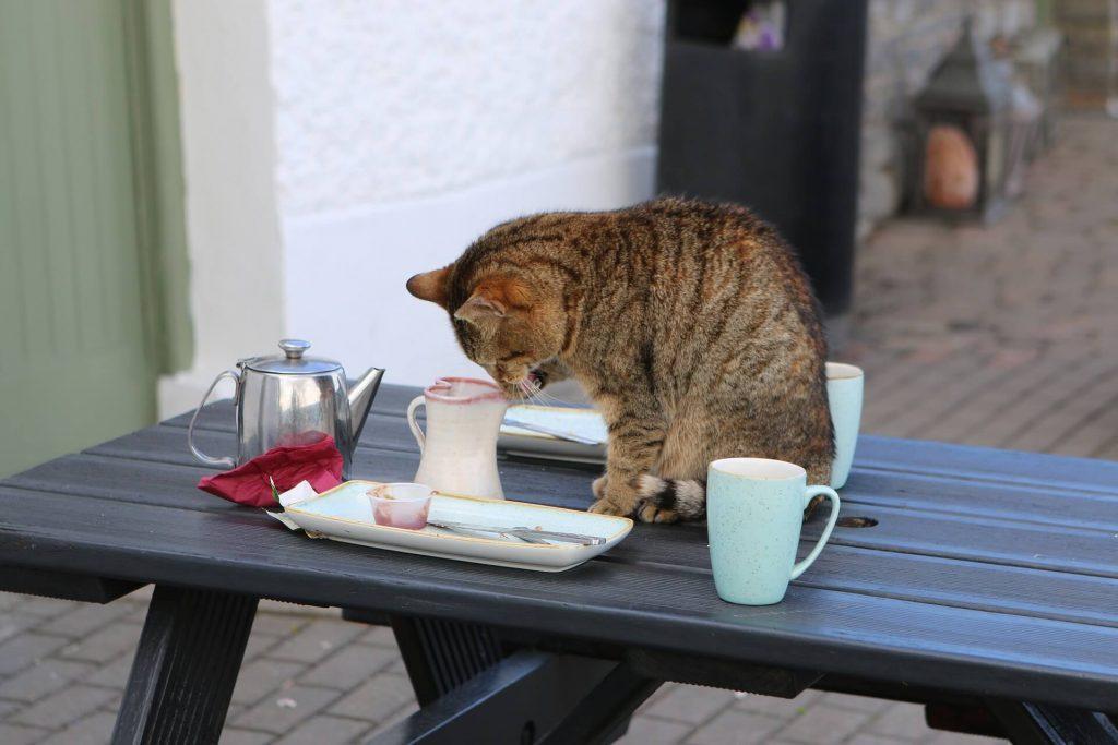 JAPAN´S CAT CAFES
