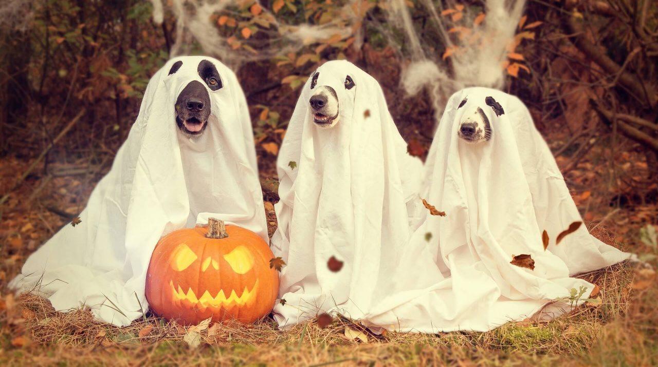 Halloween también para mascotas