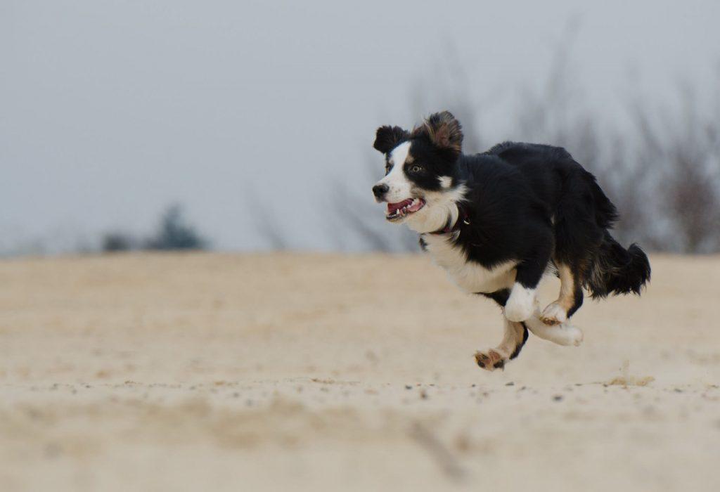 III PET RUNNER CIUDAD DE LEON 2016