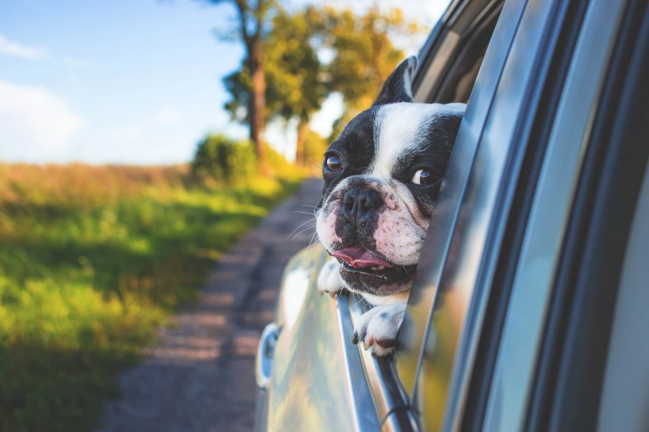 Viajes en coche con perros