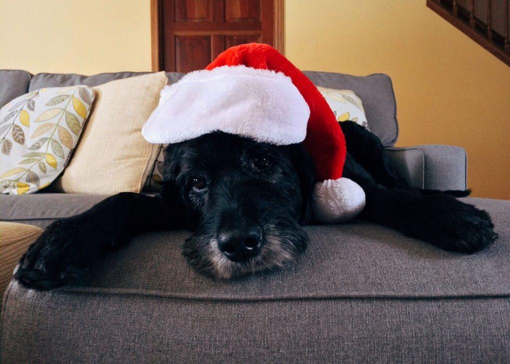 tu mascota en navidad