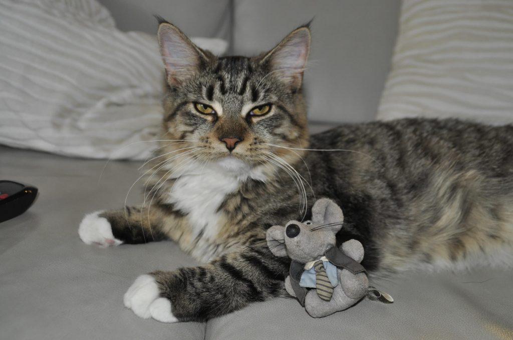 juguetes para gatos de interior