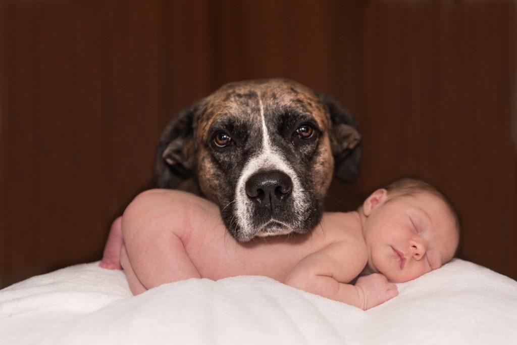 llegada de un bebe al hogar 4