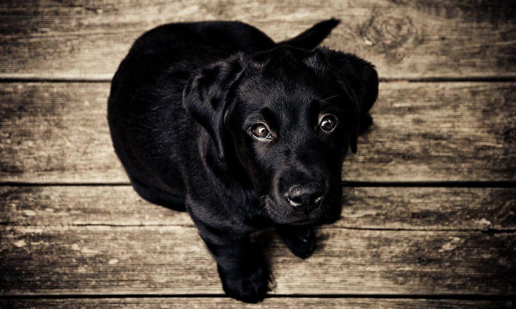 ulcera corneal en perros