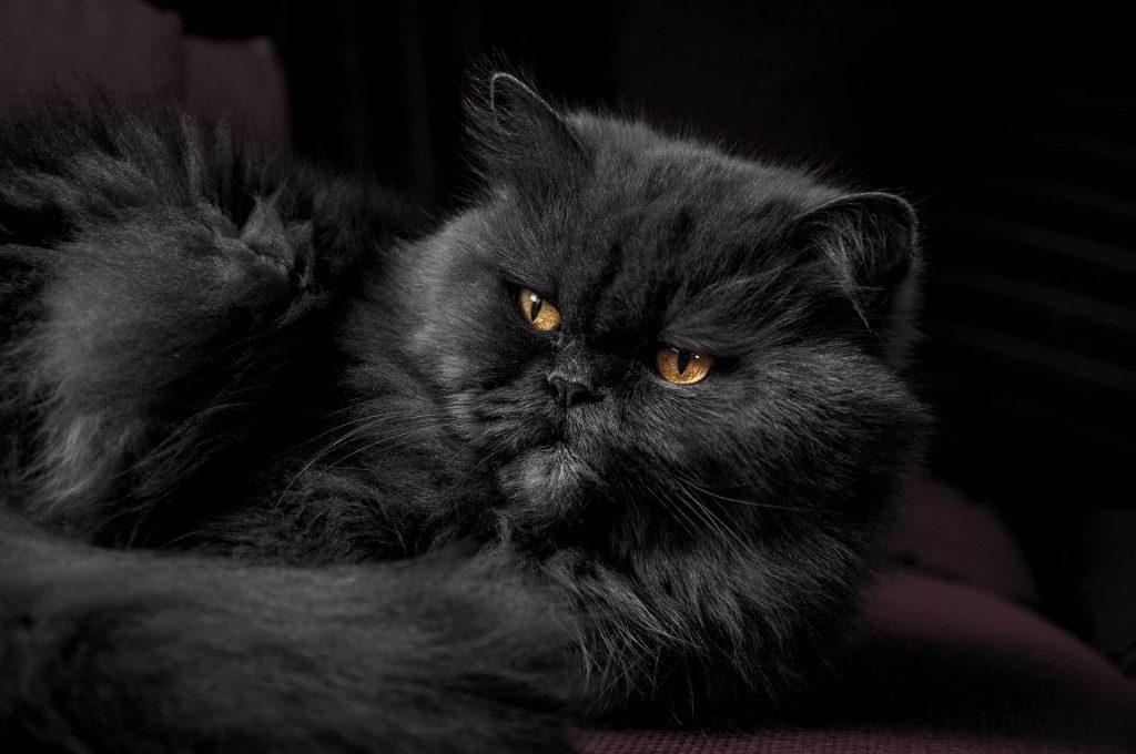 sindrome urologico felino