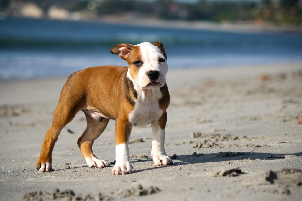 Querion dermatofitico en perros