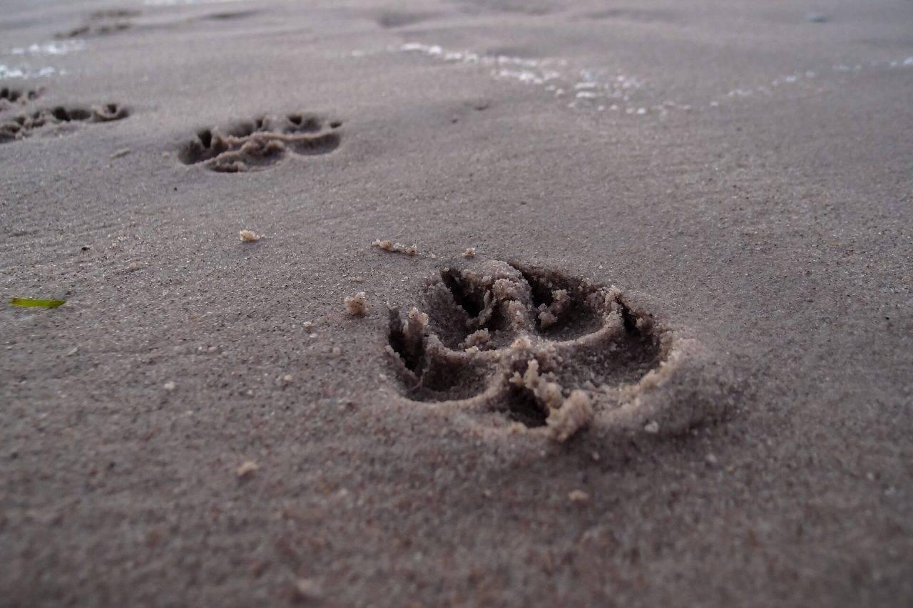 Playas perrunas de España