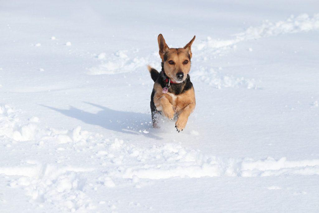 frio y artrosis en mascotas