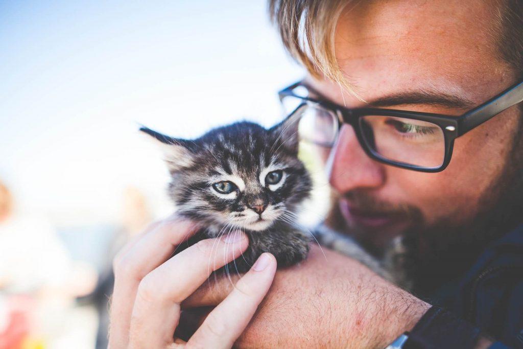 fractura de humero en gatito joven