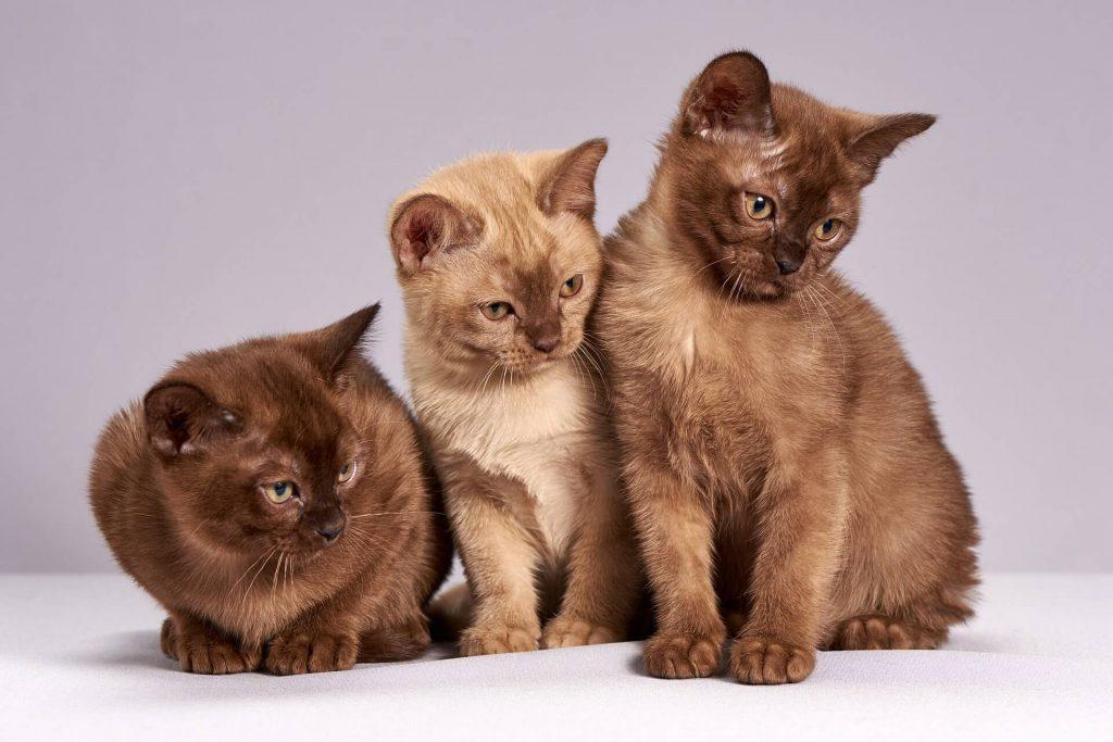 esterilizacion temprana en mascotas