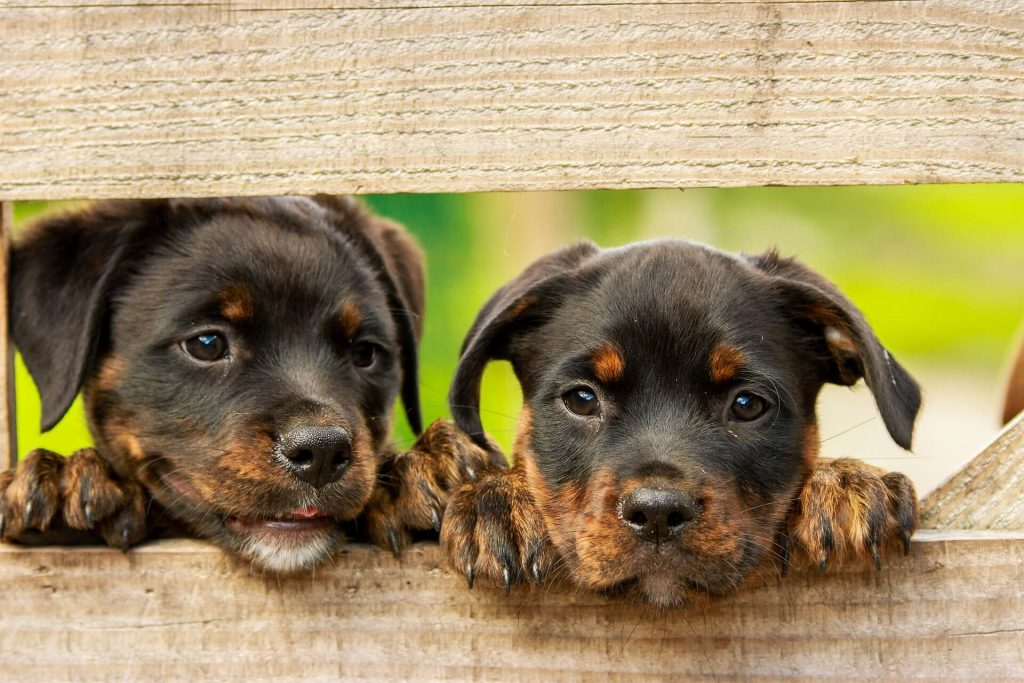 diarrea cronica en perros y gatos