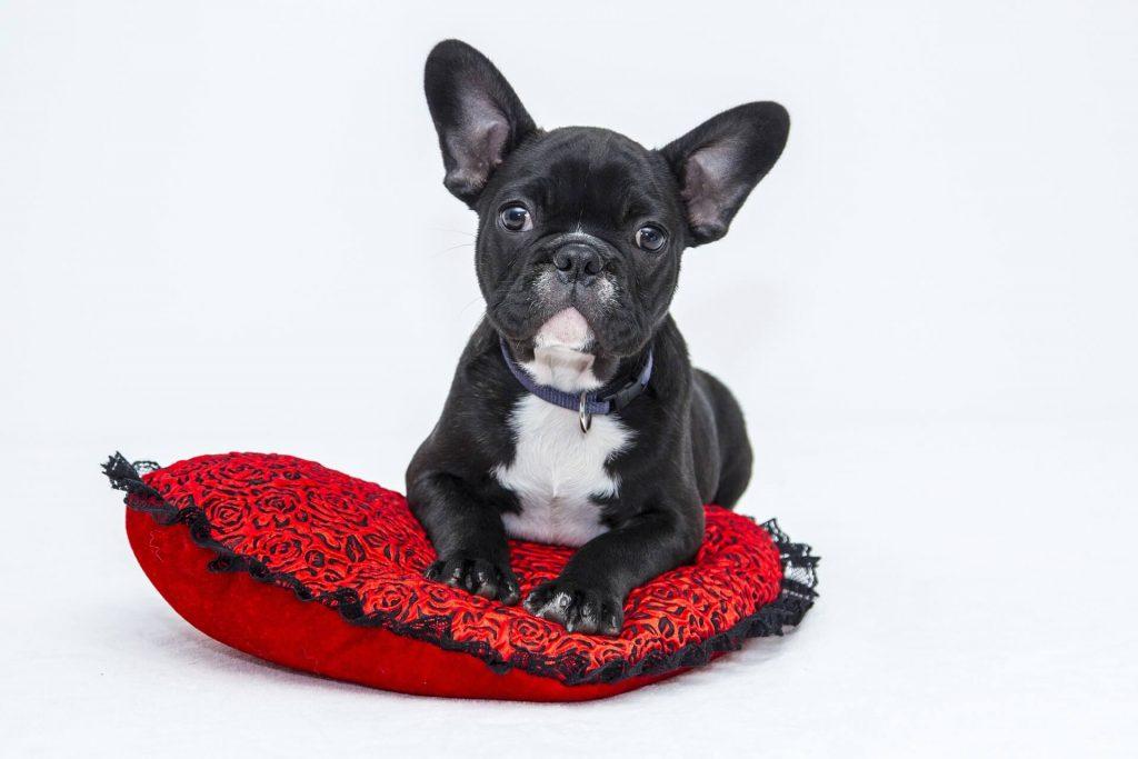 verdades y mentiras sobre los perros