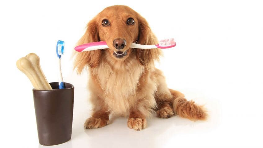 Enfermedad periodontal en mi mascota