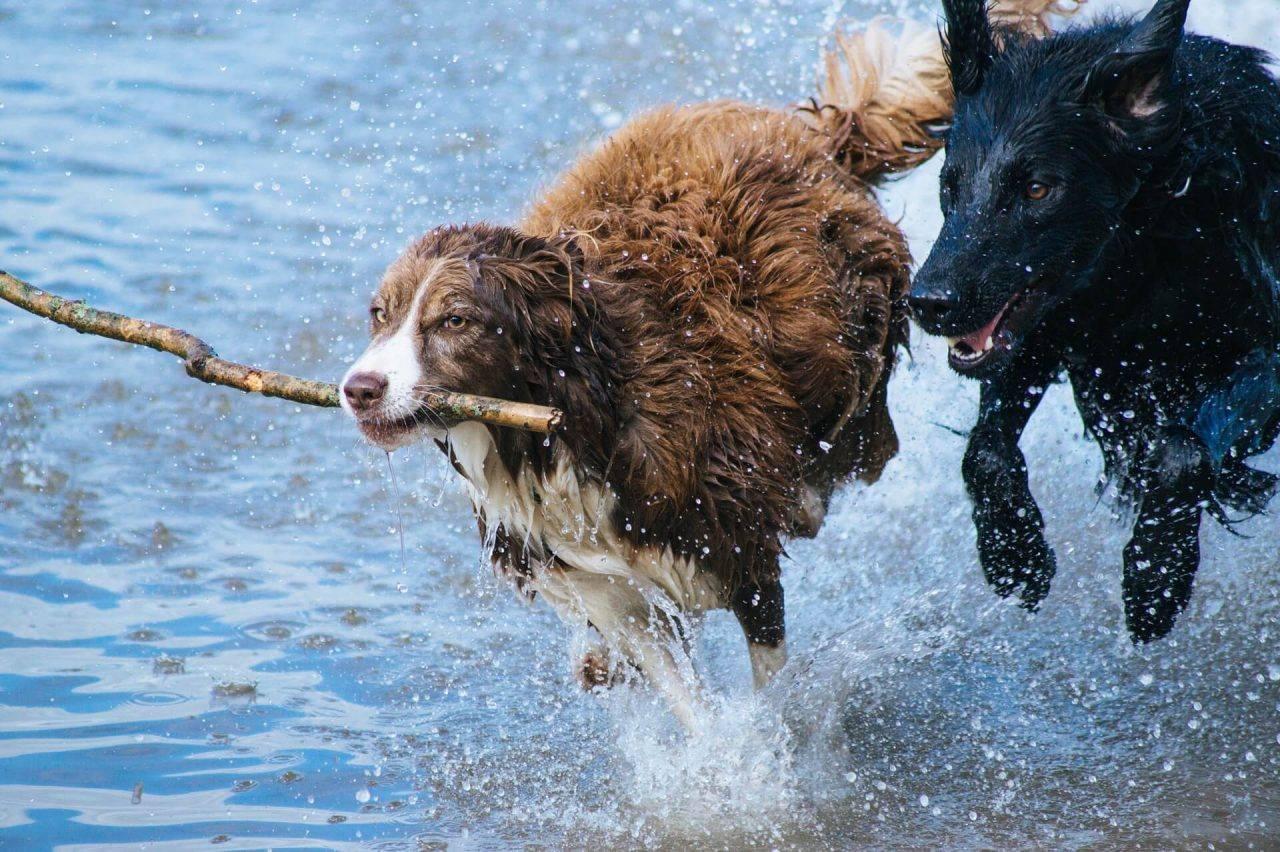 Proteccion articular para mascotas