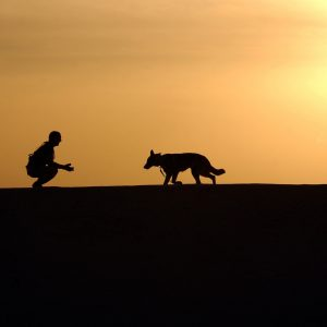 otros servicios clinica veterinaria en leon