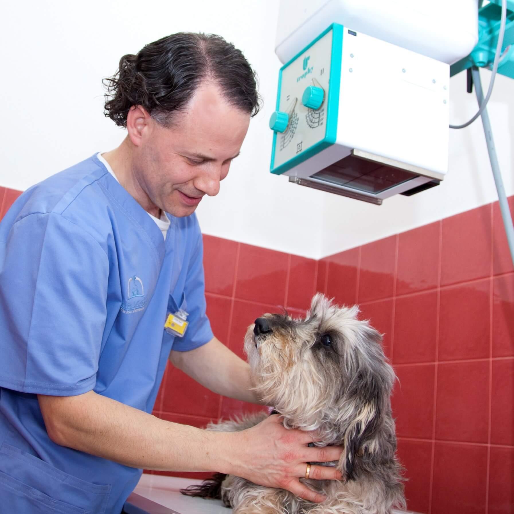 diagnostico por imagen veterinaria en leon