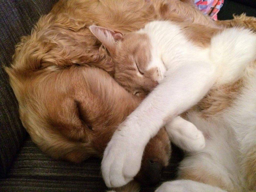 Osteoartritis en perros y gatos