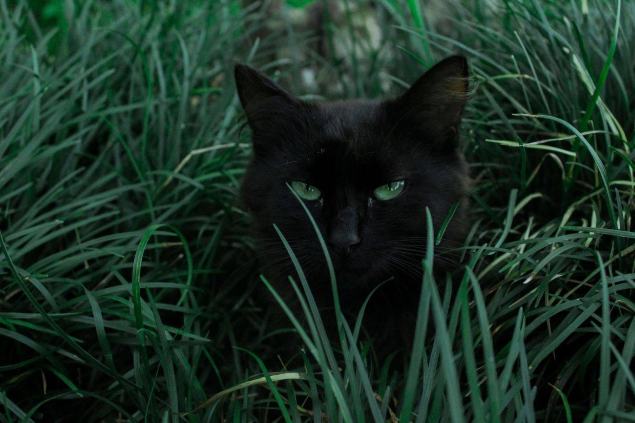 Diez curiosidades sobre los gatos