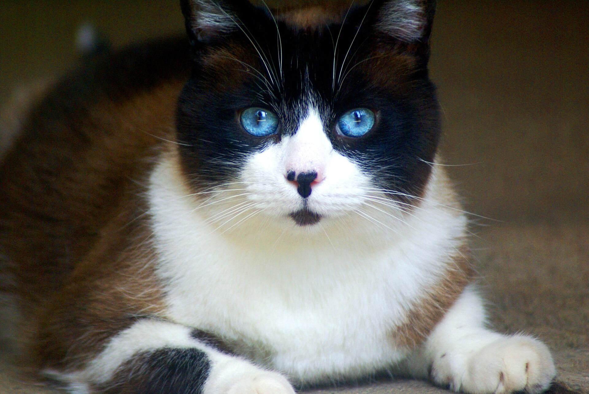Consejos para llevar tu gato al veterinario