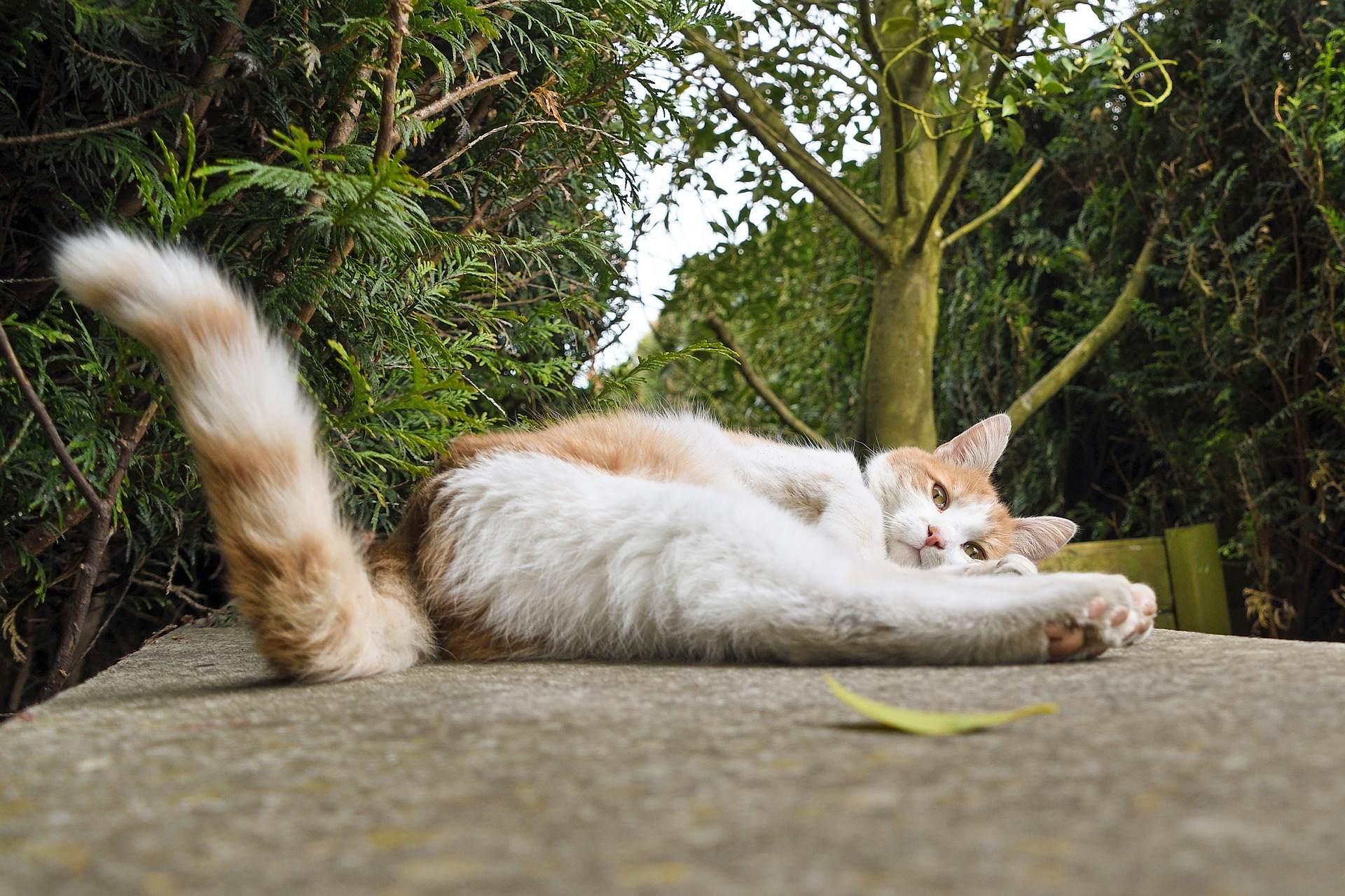 ¿Sabes por que tu gato mueve la cola?