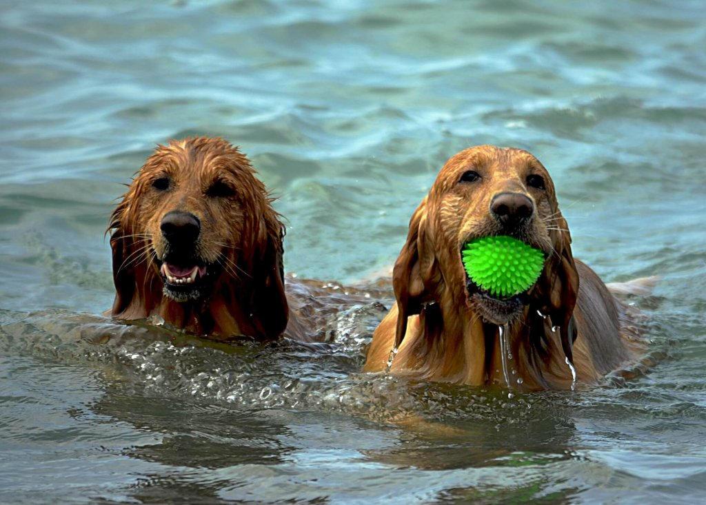 Consejos para llevar a tu perro a la playa