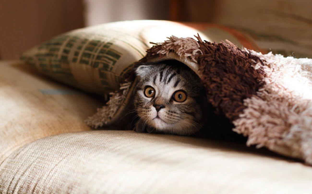 10 Beneficios de tener un gato en casa