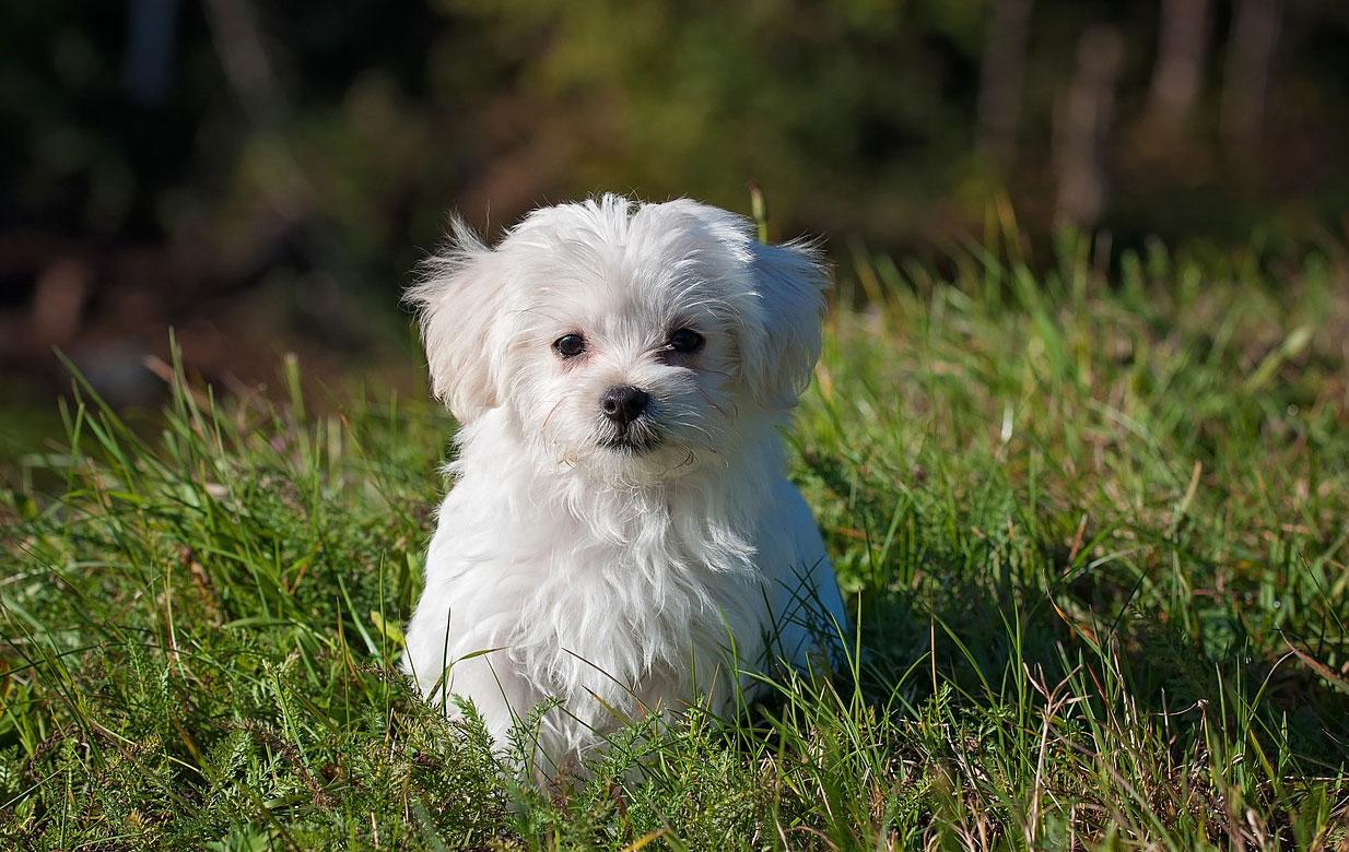 Como saber si mi perro tiene parásitos intestinales