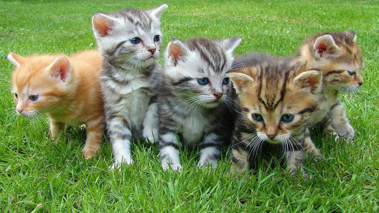 Tener dos gatos en casa