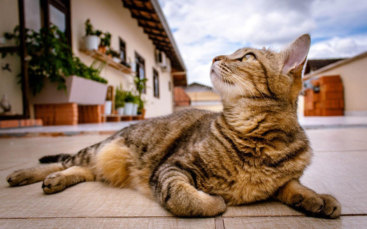 El gato terapéutico en la clinica veterinaria