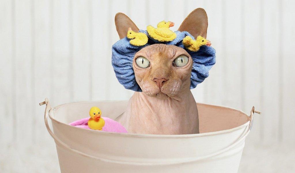 como bañar a un gato