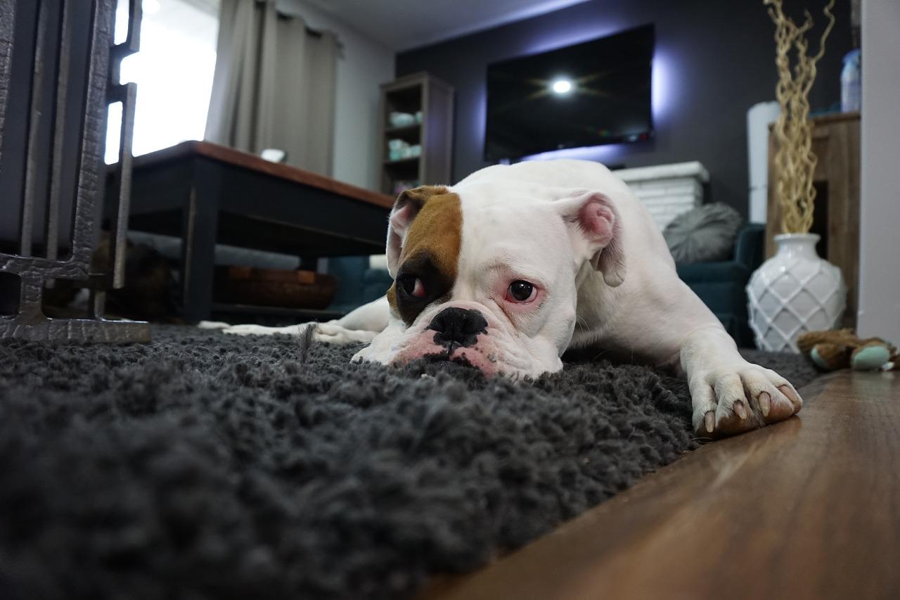 Cuidados para tu perro durante la cuarentena