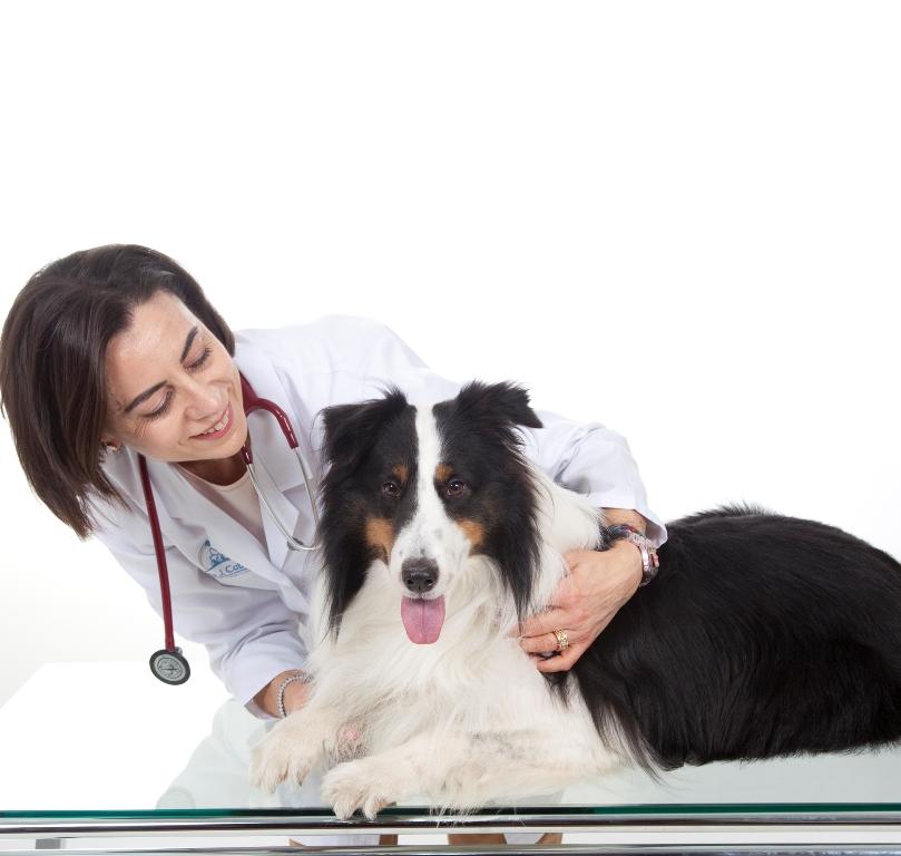 educacion y comportamiento mascotas