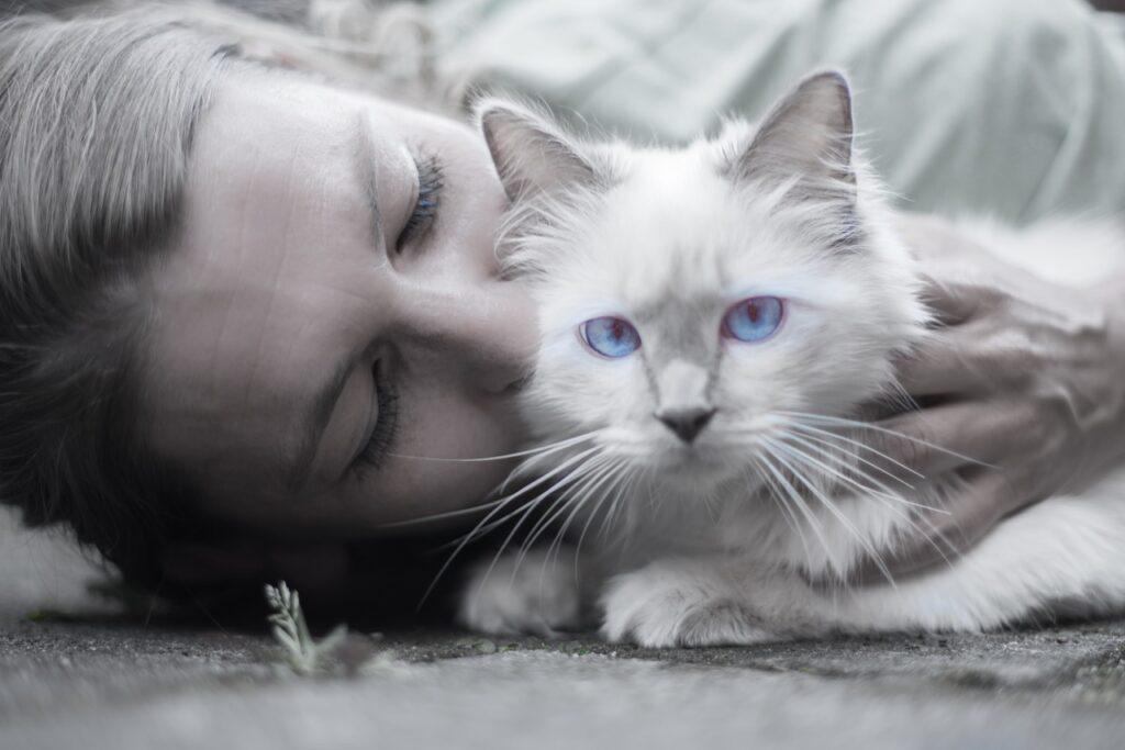Propietario de gatos-clinica cat friendly leon-mariacabeza-veterinaria