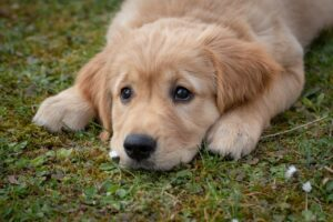 epilepsia en perros-mariacabezaveterinaria-clinica veterinaria en leon-epilepsia idiopatica canina
