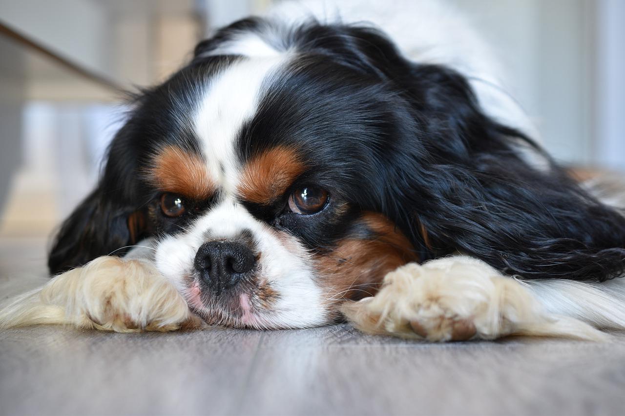 Como socializar perros cachorros y adultos