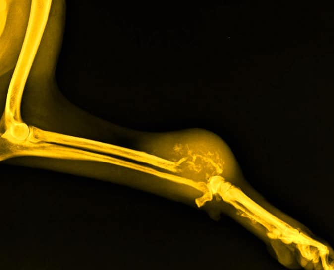Osteosarcoma en perros