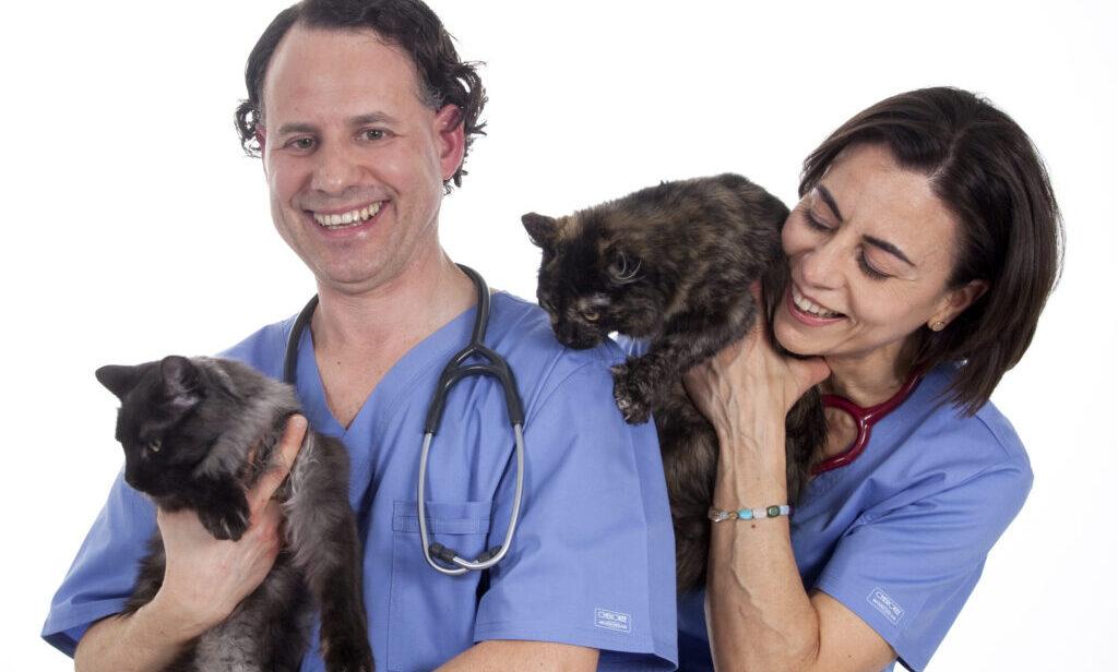 veterinarios especialistas en medicina felina