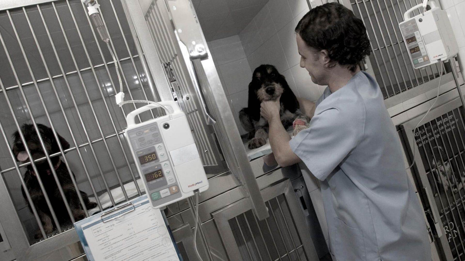 uci veterinaria en leon